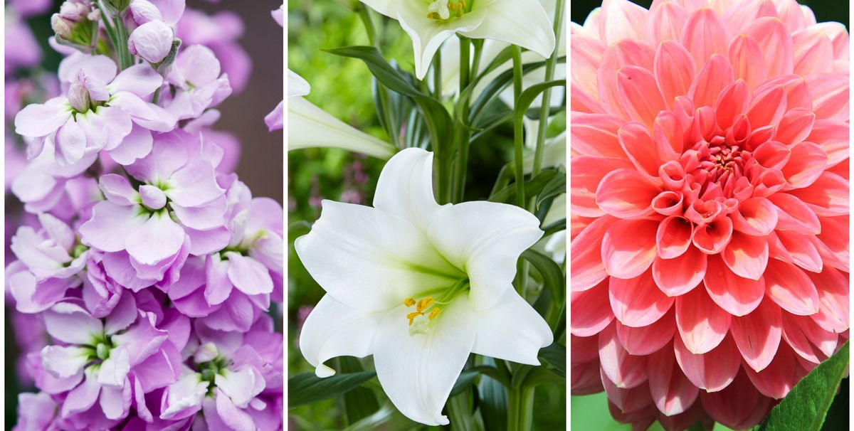 10 Summer Flowers That Bloom In July