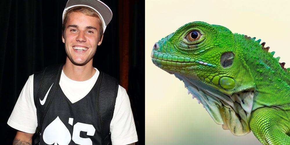 justin bieber lizard theory