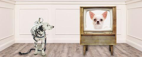 honden-televisie-kijken