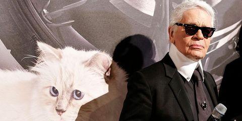 Karl Lagerfeld laat erfenis achter aan kat Choupette
