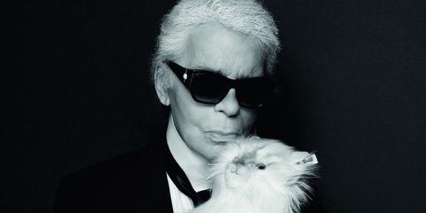 White, Eyewear, Fur, Black-and-white, Canidae, Fashion, Companion dog, Glasses, Photography, Cool,