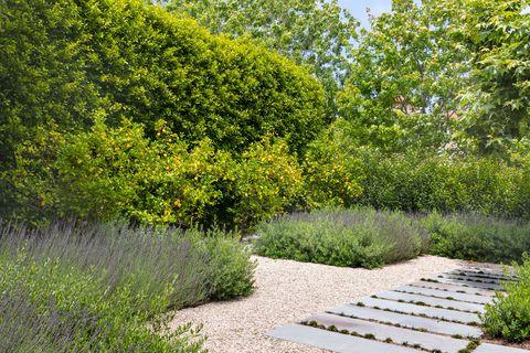 Garden, Tree, Vegetation, Natural landscape, Botanical garden, Shrub, Green, Plant, Grass, Botany,
