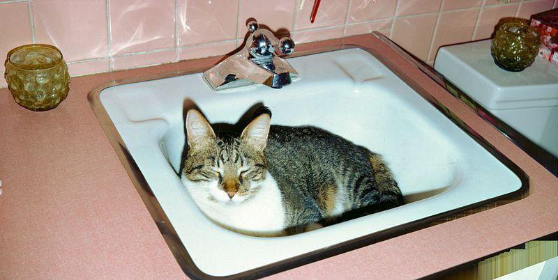 Zo springt je kat nooit meer op het aanrecht