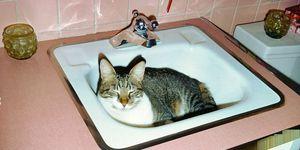 Kat in wasbak