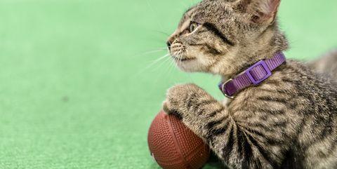 Hallmark Kitten Bowl 2018
