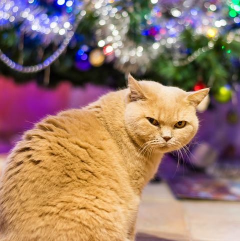 How To Keep Your Cat Out And Away From The Christmas Tree Cat Proof Christmas Tree