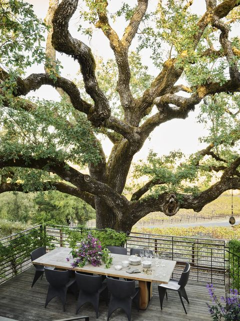 a coastal live oak shades an ipe dining deck overlooking the vineyards and forged steel and glass railings preserve the view