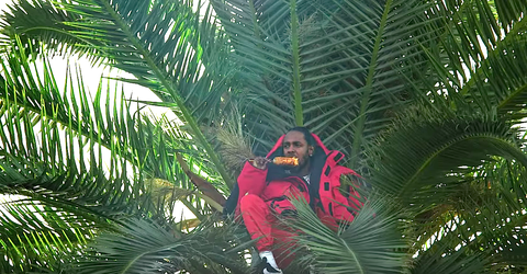 Tree, Vegetation, Elaeis, Palm tree, Arecales, Plant, Terrestrial plant, Botany, Woody plant, Jungle,