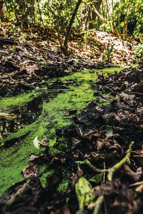 kenter creek, los angeles, creekfreaks