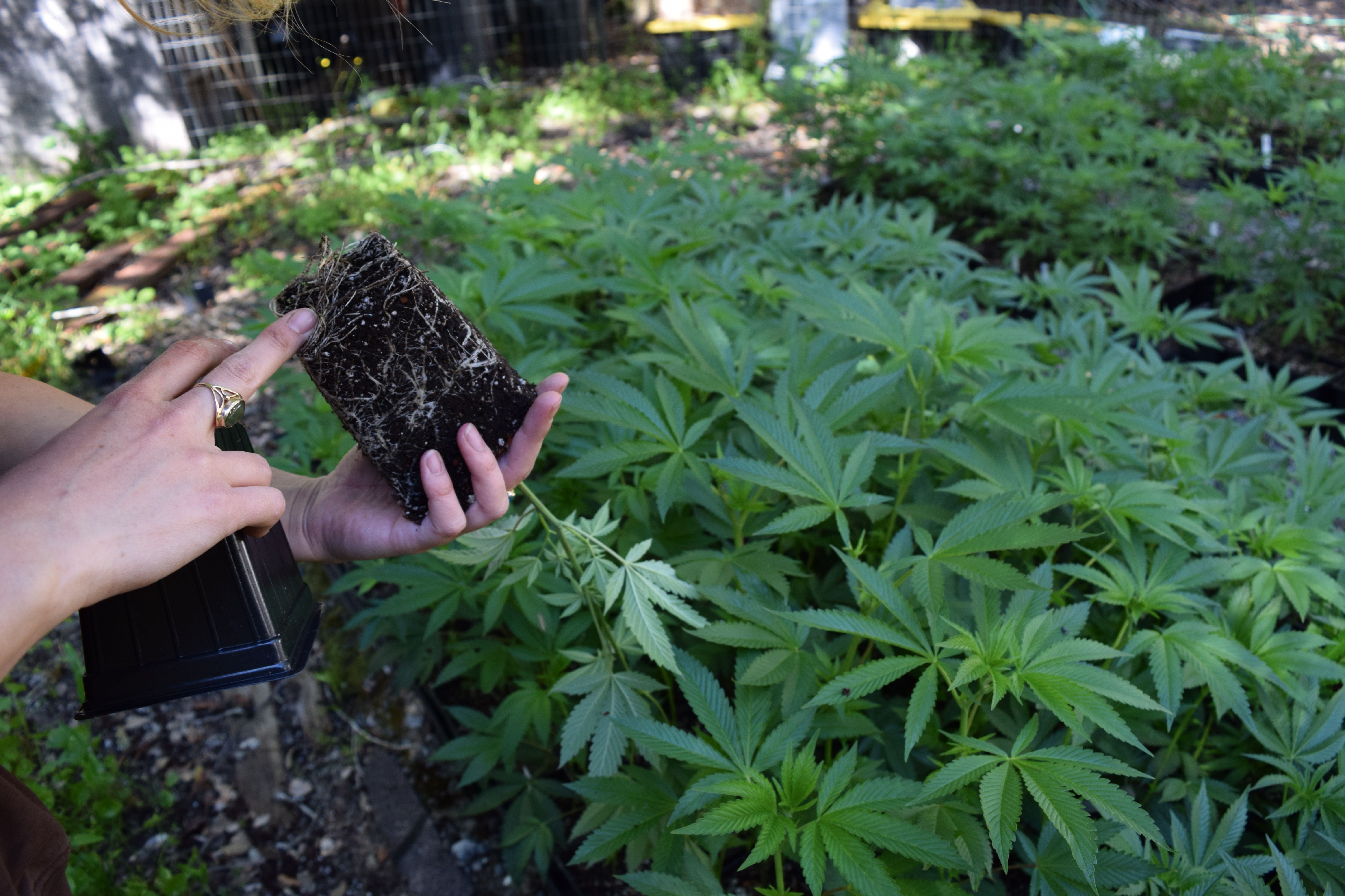 Encouraging marijuana cultivators to grow outdoors will require changes to land use laws and local permitting processes in California that so far have been unfriendly to marijuana growers.
