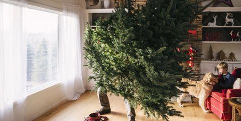 Kerstboom Kopen Bij Deze Winkels Koop Je De Beste Kerstbomen Tegen