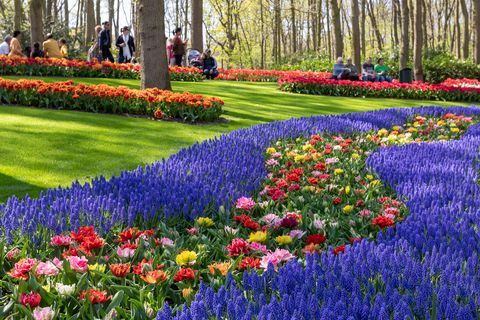 Keukenhof Gardens virtually open - We will bring Keukenhof to you! Keukenhof-2019-1556790305