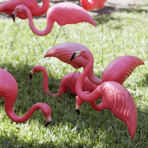 Plastic pink flamingos are seen in the y
