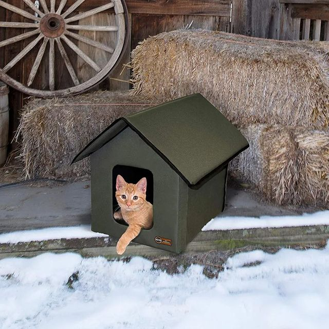 cat in heated house