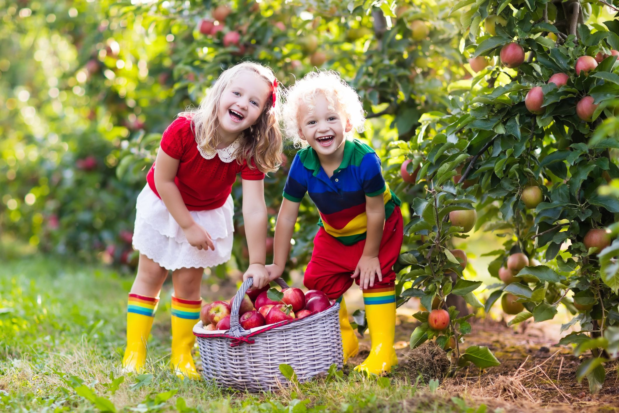 Best Apple Picking Near Nyc Top 11 Apple Orchards To Visit Near You