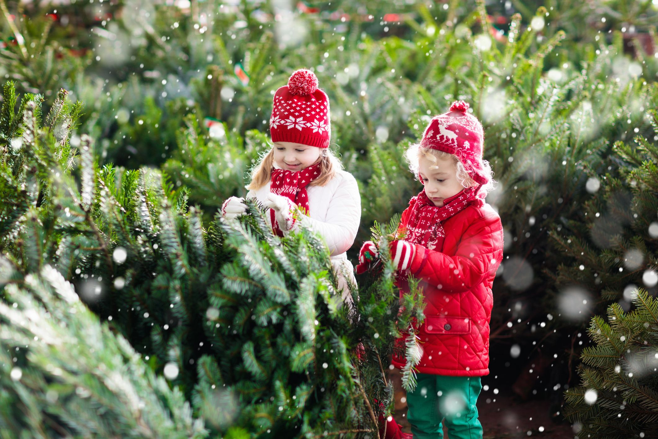 Christmas Tree Farms Near Me The Best Christmas Tree Farms In America