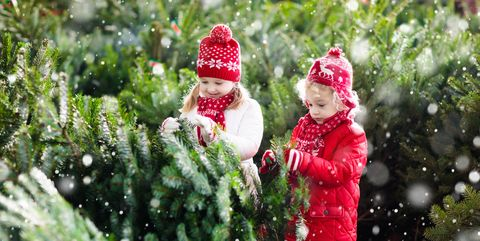 christmas tree farm kids family - Images For Christmas