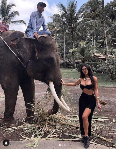 Elephant, Elephants and Mammoths, Indian elephant, Terrestrial animal, Mahout, Working animal, Tree, Organism, Photography, Wildlife,