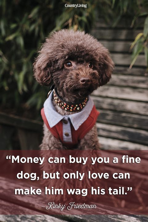 20 Cute Dog Love Quotes Puppy Sayings And Dog Best Friend Quotes