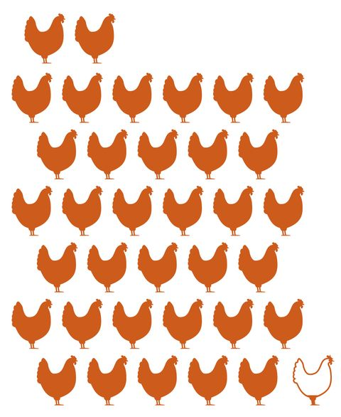 kippen Nederlandse vleesindustrie