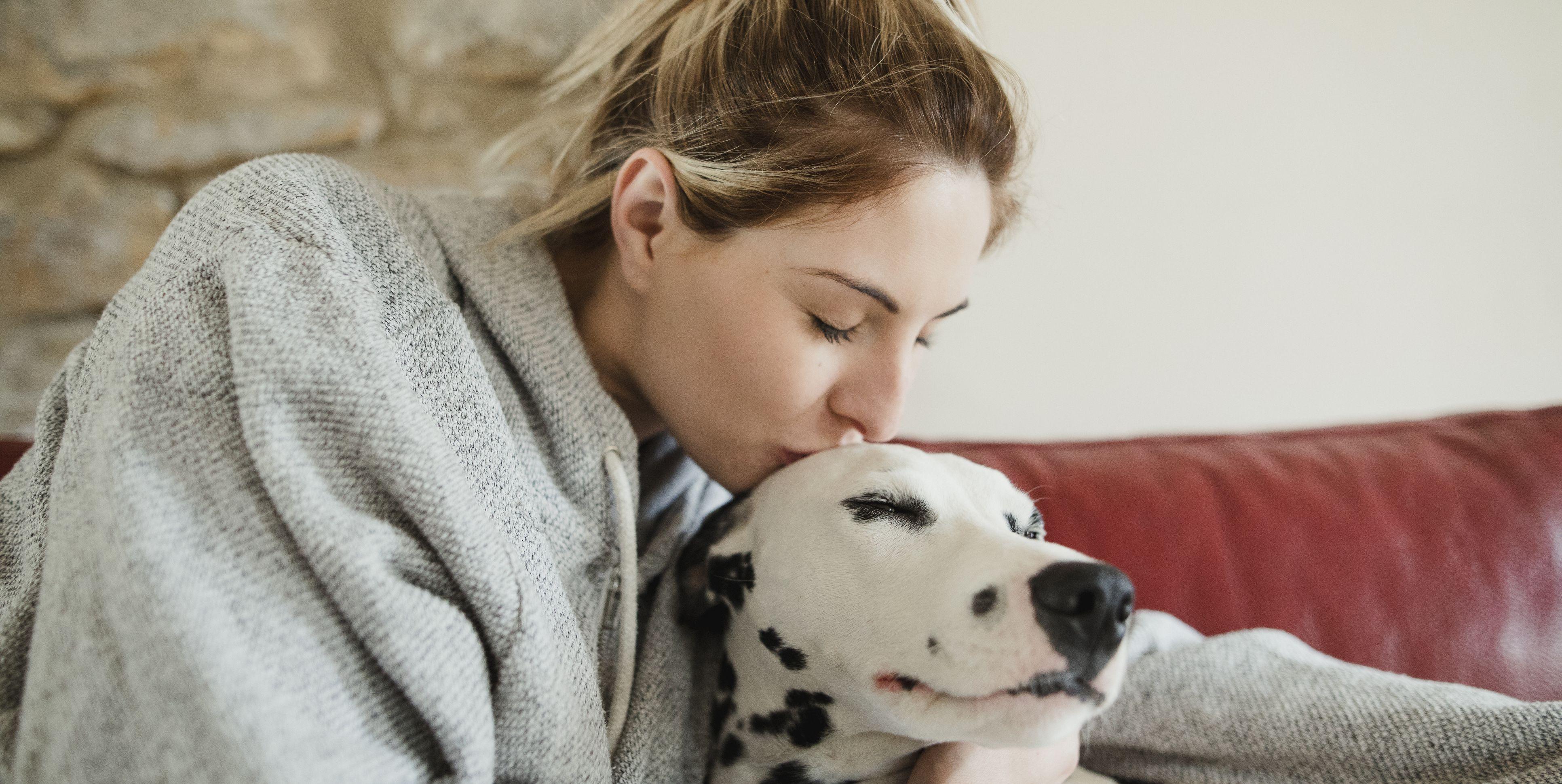 Kissing Pet Dalmatian Dog