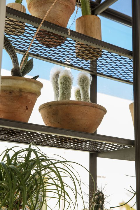 Flowerpot, Architecture, Plant, Room, House, Houseplant, Interior design, Flower, Balcony, Window,