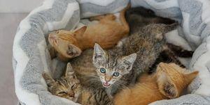 Kitten BnB en Nueva Jersey