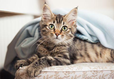 cute cat names