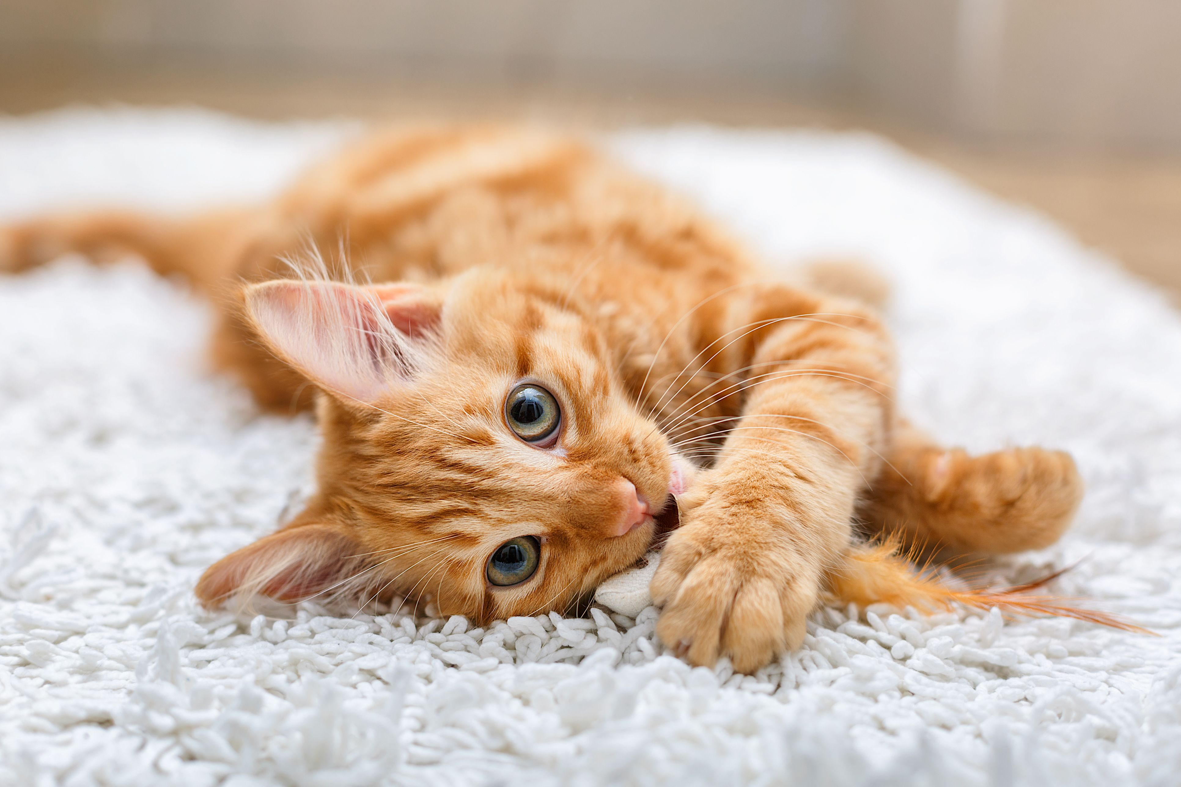 50 Cute Cat Names Adorable Names To Give A Boy Or Girl Kitten