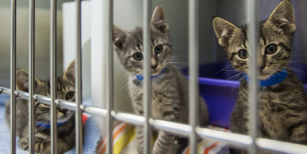 6 Important Things to Consider When Adopting a Cat