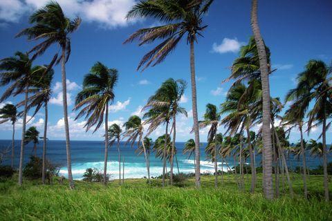 Summer Vacation Travel Destinations Saint Kitts St. Kitts Caribbean
