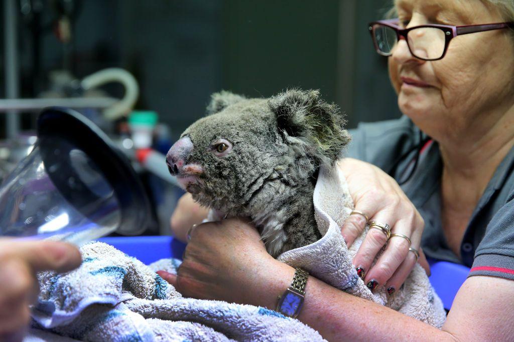 Knitters unite worldwide in aid of Australian bush fires