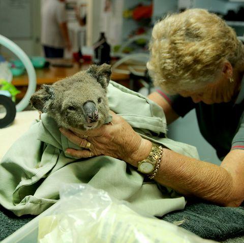 Australia injured wildlife knitting