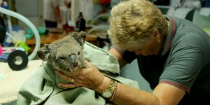 Australia injured wildlife knitting