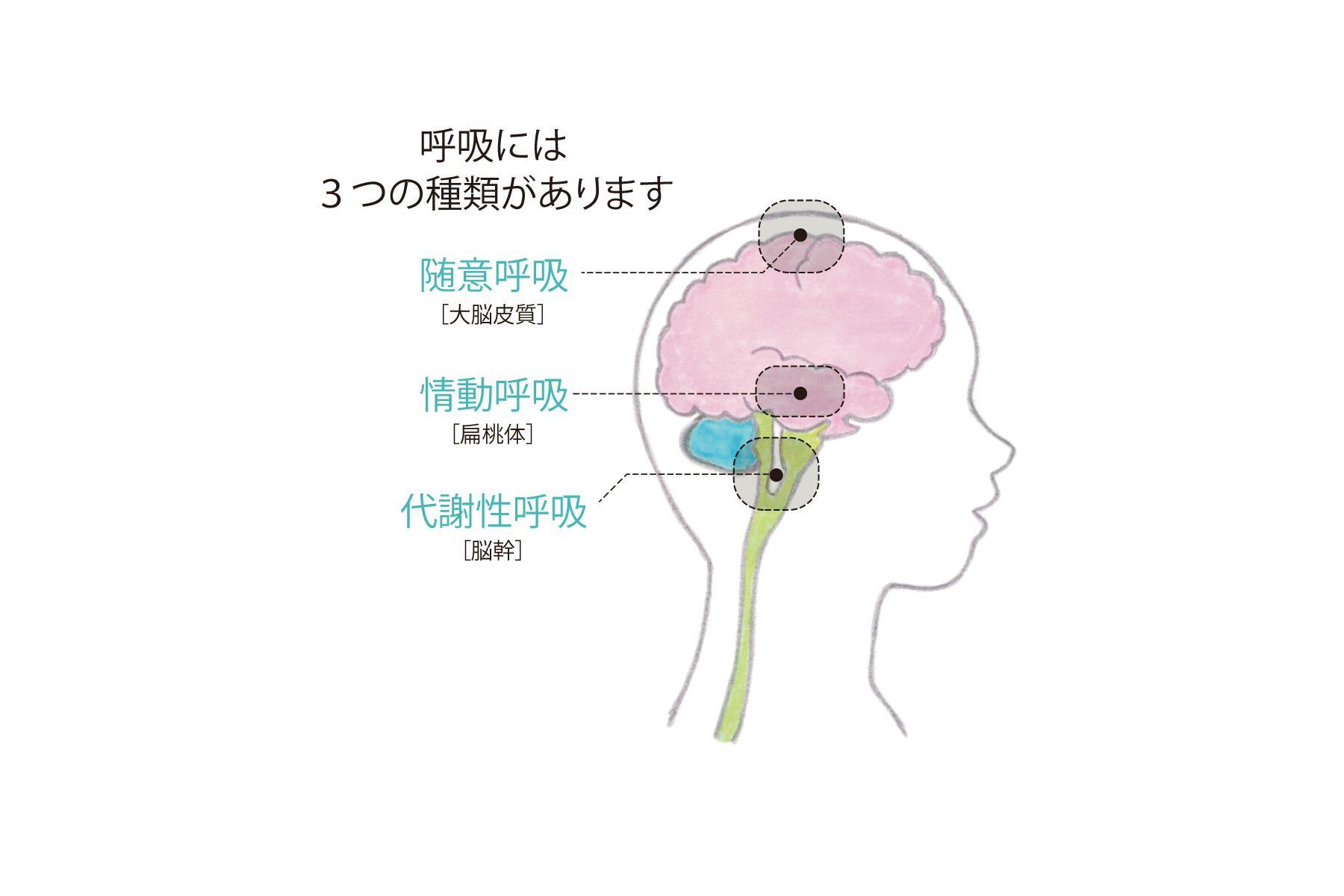 シクソトロピーストレッチ、ヨガ、座禅。呼吸筋を使う呼吸法で、更年期 ...