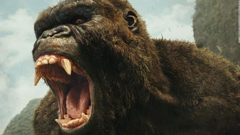 Terrestrial animal, Snout, Common chimpanzee, Mouth, Tooth, Adaptation, Fang, Wildlife, Jaw, Primate,
