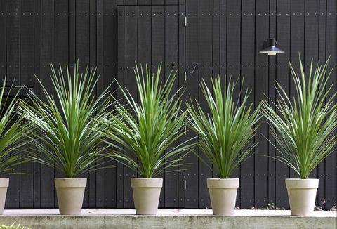 Mooiwatplantendoen.nl Cordyline plant