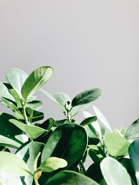 Plant, Leaf, White, Flower, Green, Flowering plant, Houseplant, Tree, Branch, Herb,