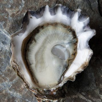 oysters - sexy valentine's day gifts