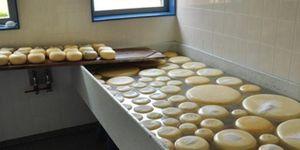 moedermelk-kaas-maken