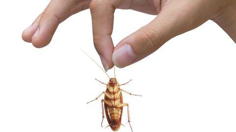 overleven-kakkerlakken-kernoorlog