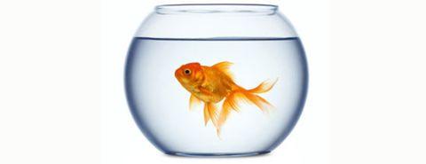 kunnen-vissen-verdrinken
