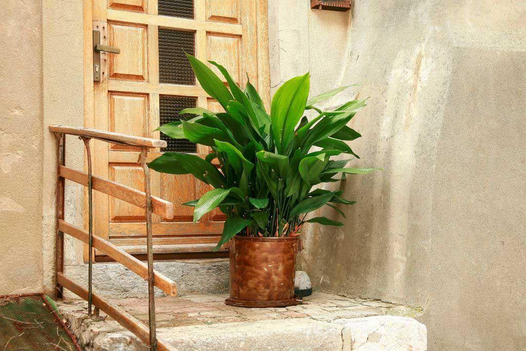Planten In Woonkamer : Planten geavanceerde woonkamer interieur met zwarte tafel bank