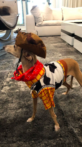 Kylie Jenner dressed her dogs up as 'Toy Story' characters