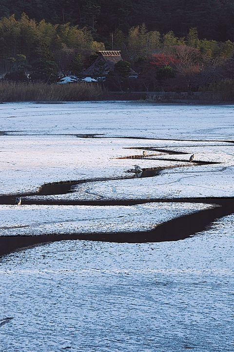 京都 広沢池
