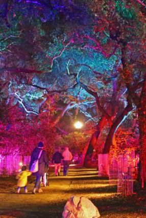Enchanted Forest of Light at Descanso Gardens Best Christmas Light Displays Near Me