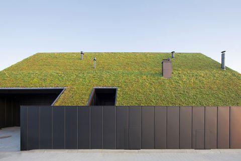La casa debajo del techo, un techo inclinado sin ventanas repleto de plantas suculentas