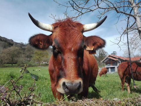 Agroturismo La Casona de Belmonte