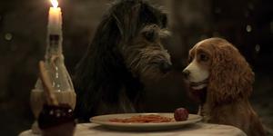 la dama y el vagabundo 2019 trailer pelicula disney+