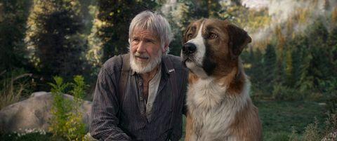 """Harrison Ford en """"La llamada de lo salvaje"""""""